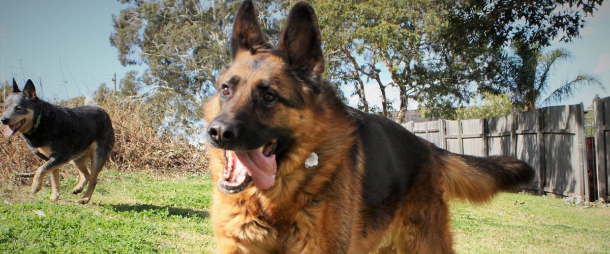 Therapy Dog Training Orange County